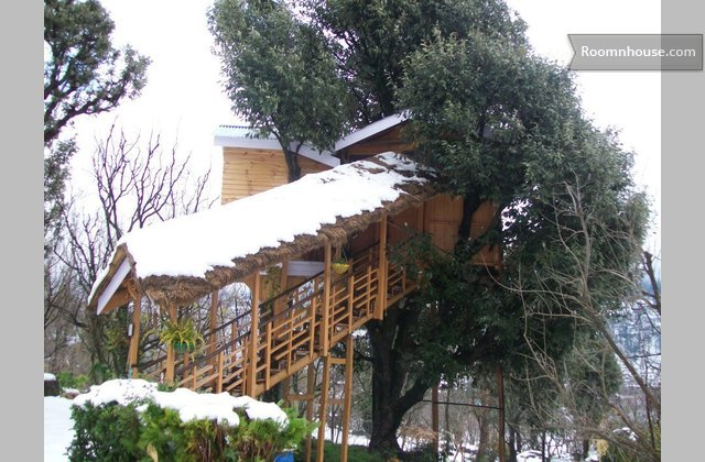 Treehouse In Manali}